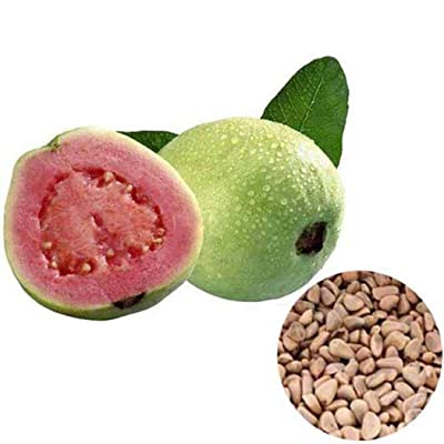 Vpicuo 20pcs/ Bag Guava Tree Seeds Organic Vegetable Fruit Tree Plant Fruits : Garden & Outdoor