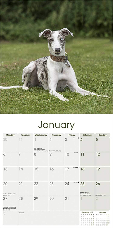 Italian Greyhound 2020 Dog Calendar 15/% OFF MULTI ORDERS!
