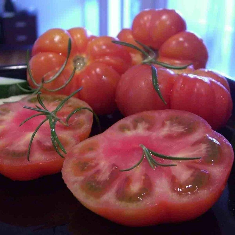 125 Seeds Marmande Tomato Solanum Lycopersicum Quality Heirloom Non-GMO French #DS06 by iniloplant