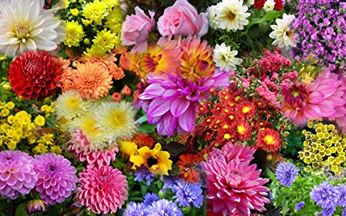 SHOPUS | Flower Food by EZ-GRO | 10-30-20 Blossom Booster is