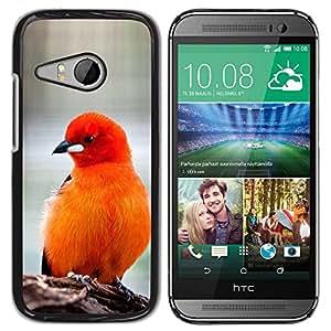 Paccase / SLIM PC / Aliminium Casa Carcasa Funda Case Cover para - bird feathers orange red furry beak - HTC ONE MINI 2 / M8 MINI