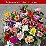 100PCS/SET Rainbow Rare Multi Color Rose Flowers Seeds Home Garden Decor Plants Seeds Beautiful Perennial Balcony Flower