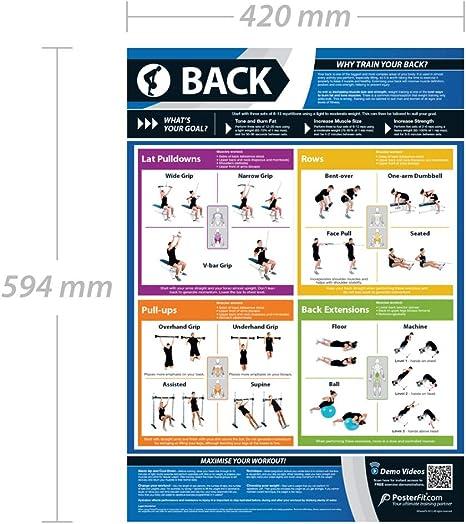Ejercicio de espalda | Entrenamiento completo mejora el entrenamiento de fuerza | Póster laminado de gimnasio y hogar | Incluye soporte de ...
