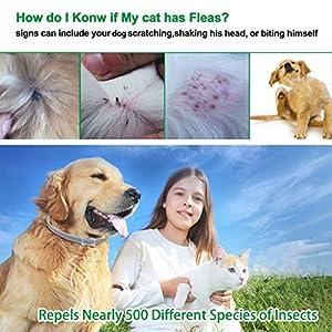 coleira-antipulgas-para-cachorro-cães