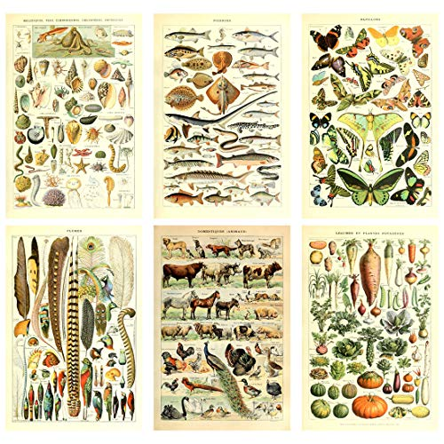 Meishe Art Poster Print Vintage Biology Botanical Science Wall Decor Sea Creature Animals Seashell Fish Marine Life Vegetables Birds Feather Butterflies Breeds Species Identification Set of 6pcs