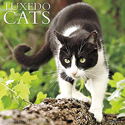 2017 Just Tuxedo Cats Wall Calendar