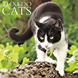 Just Tuxedo Cats 2017 Wall Calendar