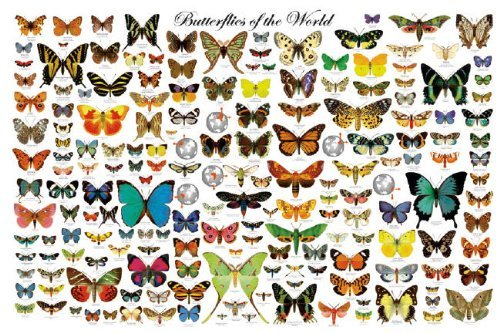 Laminated Butterflies of the World Educational Science Arthropods Chart Poster 24x36