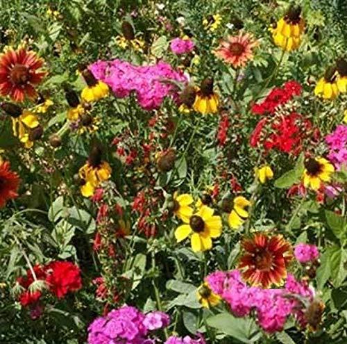 Southeast Wildflower Mix Seeds Attract Butterflies, Bees and Grow Cut Flowers ST03 (1,600 Seeds)