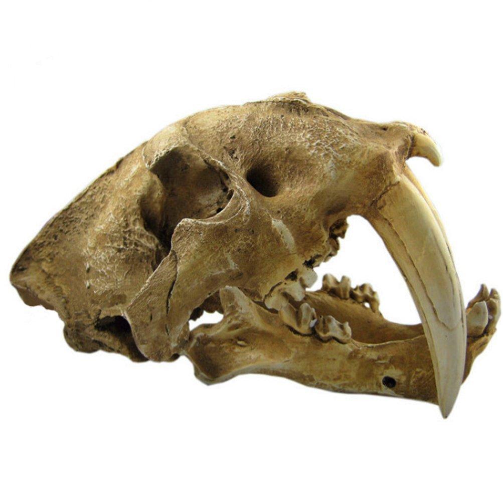 Gmasking Resin Smilodon Sabertooth Tiger 1:1 Skull Replica by Gmasking (Image #2)