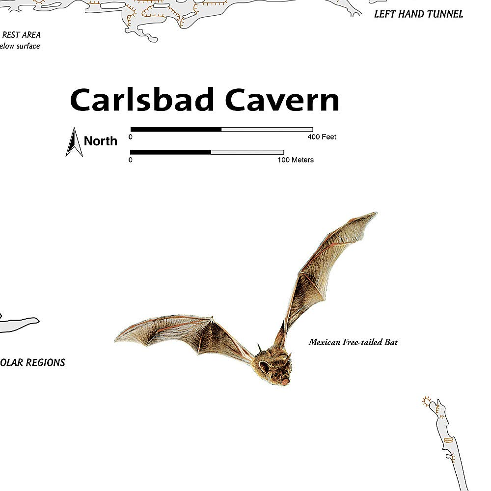 National Geographic Carlsbad Caverns Np #247 New Mexico