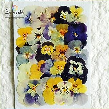 5926a41c57 Amazon.co.jp: 押し花素材 パンジー小(ビオラ)カラーミックス25枚 ...