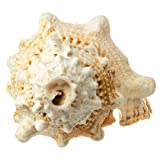 Nautical Crush Trading Frog Shell Horn | 1 Frog