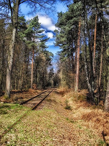 Germany Railroad - Home Comforts Peel-n-Stick Poster of Railway Forest Railroad Trees Germany TracksPoster 24x16 Adhesive Sticker Poster Print