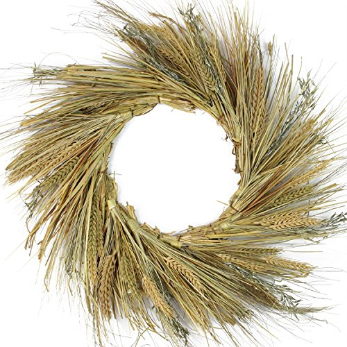 Northlight Unlit Autumn Harvest Wheat Grass and Grapevine Thanksgiving Fall Wreath, 22