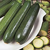 Courgette - All Green Bush - 25 Seeds