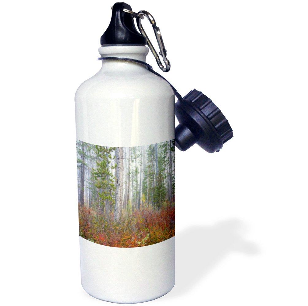 3dRose wb/_144331/_1USA Idaho White pine trees-US13 JWI0110-Jamie and Judy Wild Sports Water Bottle Challis National Forest 21 oz pine trees-US13 JWI0110-Jamie and Judy Wild Sports Water Bottle