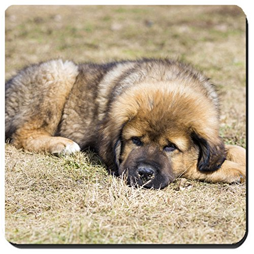 Liili Suqare Mousepad 8x8 Inch Mouse Pads/Mat Cute Puppy Tibetan Mastiff outdoors Horizontal picture Image ID 21817430