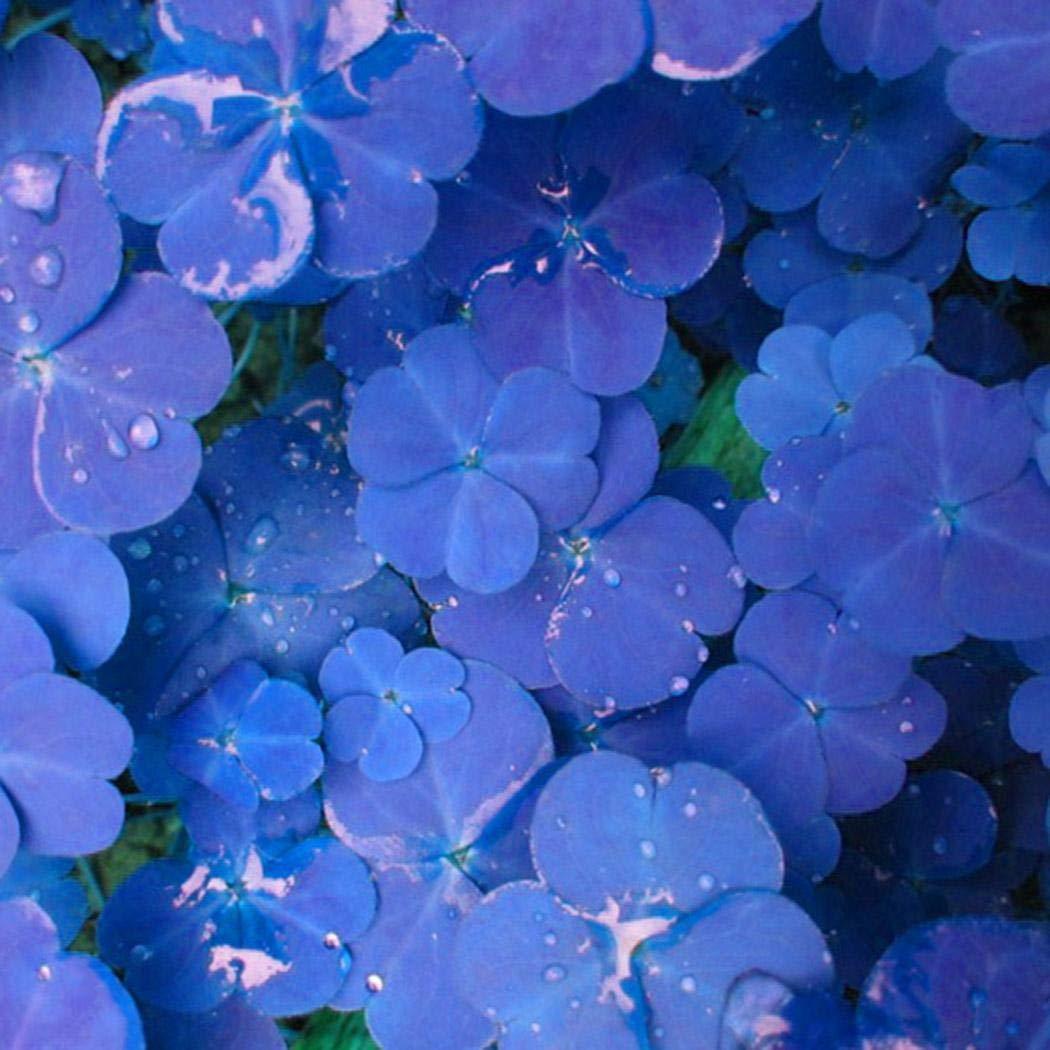 10samen Cioler Klee Samen Gl/ücksklee Samen Garten Bodendecker-Pflanzen-Samen Klee Blumensamen Gartenpflanze DIY