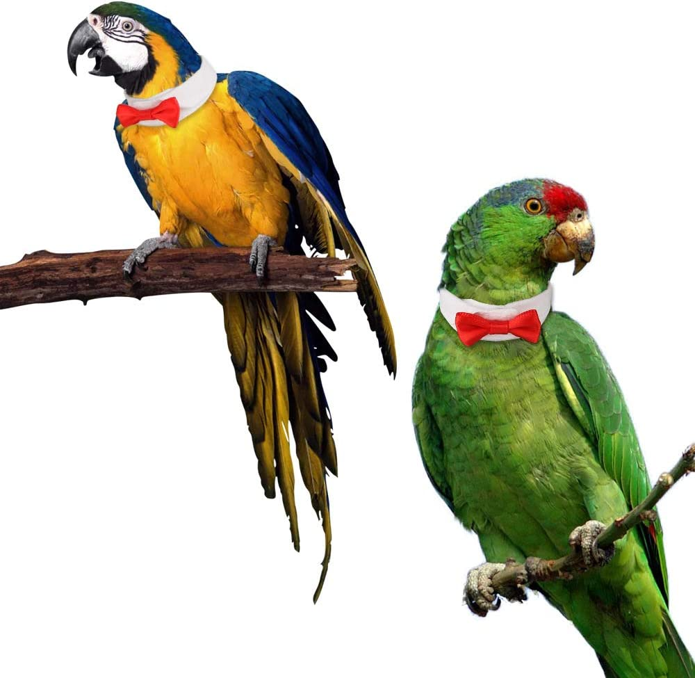 Jnzr 2 Pcs Pet Bird Collar 4 Size Adjustable Parrot Bird Collar Bow Tie For Small To Large Parrots And Small Animals Amazon Co Uk Sports Outdoors