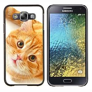 KLONGSHOP // Cubierta de piel con cierre a presión Shell trasero duro de goma Protección Caso - Naranja American Shorthair Cat - Samsung Galaxy E5 E500 //