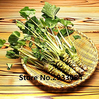 200pcs/lot Wasabi Seeds, Japanese Horseradish Seed Vegetable for planting easy to grow Bonsai Plant DIY Home Garden Plants : Garden & Outdoor