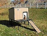 Large 4' X 4' Urban Chicken Coop