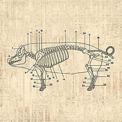 Amazon Pig Diagram Print Pig Skeleton Farm Animal Wall Art