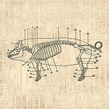 61UcriBZVOL._SY355_ amazon com pig diagram print pig skeleton farm animal wall art