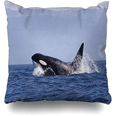 Funda de cojín Orca Azul Antártida Orca Orcinus Breaching ...