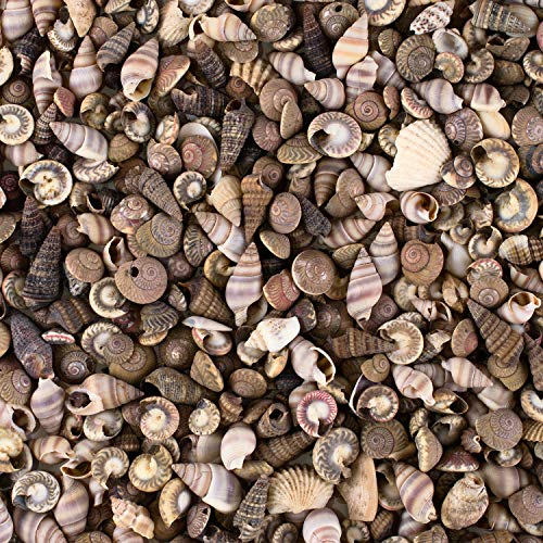 - Tiny Miniature Fairy Garden Beach Critter Seashells Marine Life Collection for Art & Craft Project, Outdoor & Indoor Home Decoration, Party Favor, Invitation (4.5oz Bag, 500 Shell)