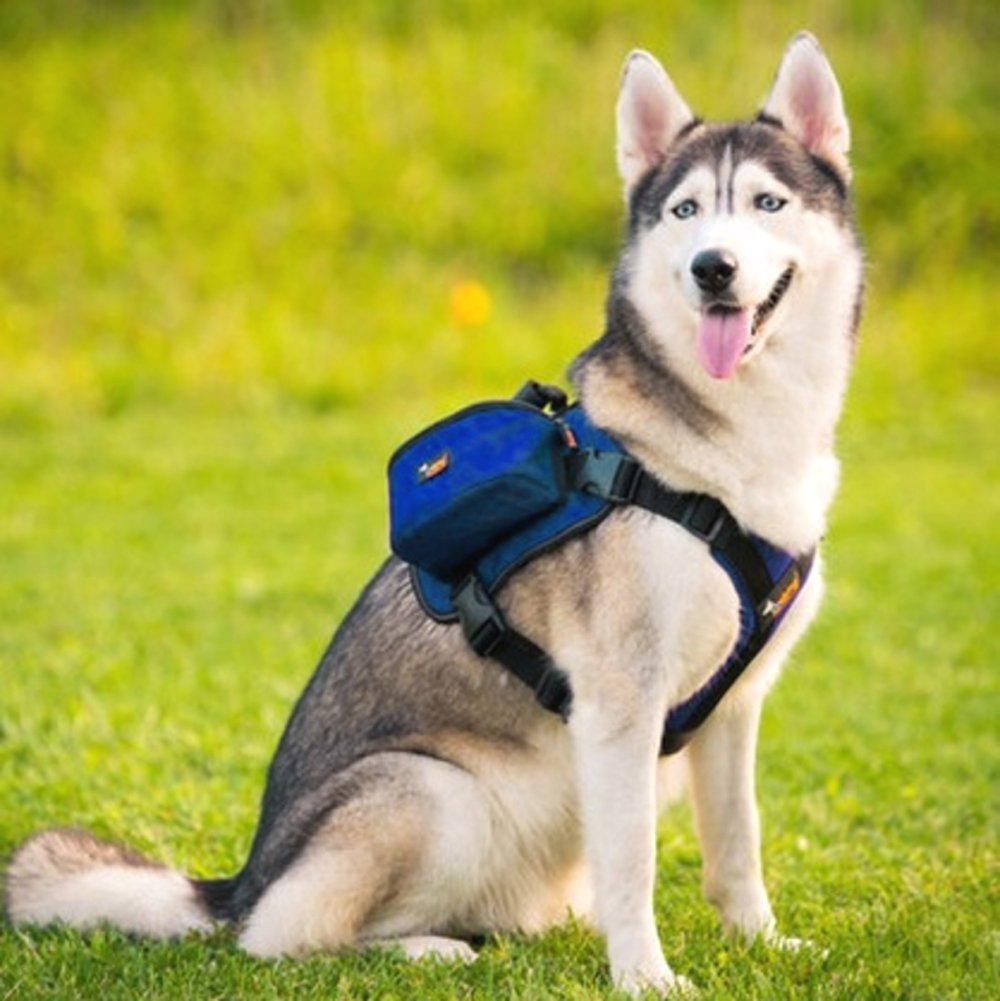 Paw Essentials Adjustable Saddle Bag Dog Backpack Carrier with Harness for Medium large to Large Dogs for Traveling, Hiking and Camping (Purple, L - neck:19.5-27.5 inches, chest:27.5-38.5 inches) PEBP-LPU