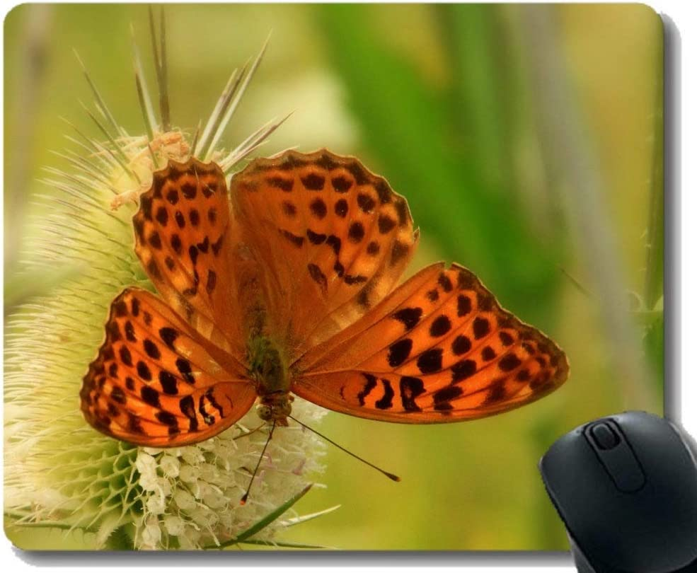 Personalized Your Gaming Mousepad,Butterfly Admiral Red Admiral Insect Animal Gaming Mouse Mat