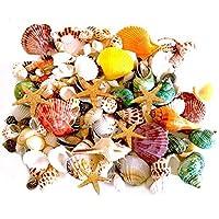 135 PCS Mini Sea Shells Mixed Beach Seashells Starfish, Colorful Natural Seashells...