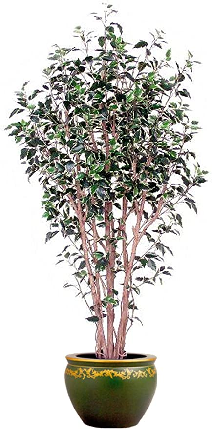 Amazon Com Home In The City 7ft Varg Ficus Tree 2pc Home Kitchen
