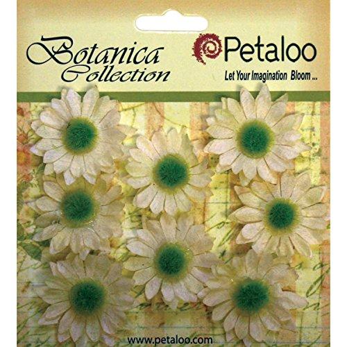 (PETALOO Botanica Mini Gerbera Daisies 1.25