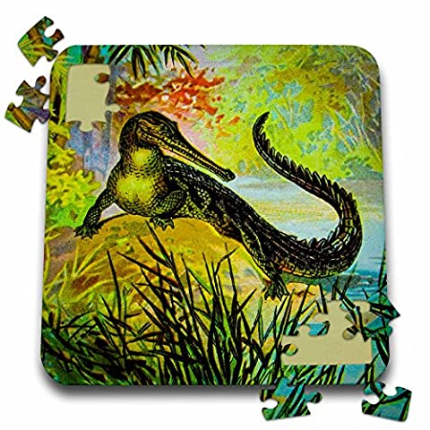 Scenes from the Past Magic Lantern - Vintage Magic Lantern Caimen Crocodile Alligator Reptile Nature Wild - 10x10 Inch Puzzle - Alligator Puzzle