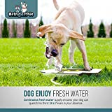 BringerPet Upgraded Dog Drinking Water Fountain Step On – Outdoor Auto Pet Water Sprinkler System for Fresh Water