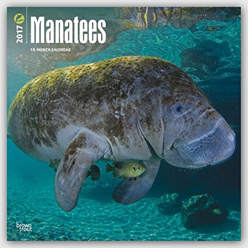 Manatees - Seekühe 2017-18-Monatskalender: Original BrownTrout-Kalender [Mehrsprachig] [Kalender] (Wall-Kalender)