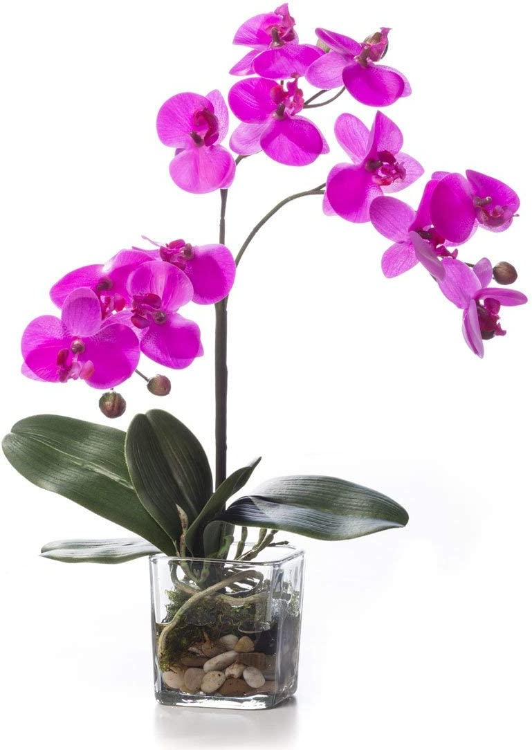 Bright Purple Fake Orchid Plant