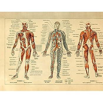 Amazon Meishe Art Vintage Poster Print Human Anatomy Reference