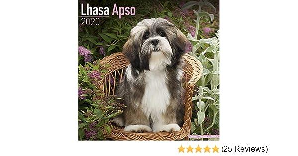 2019 LHASA APSO DOG CALENDER BY AVONSIDE CALENDARS