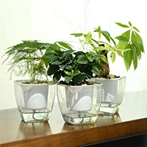 FENGZHITAO Self-Watering Planter, Clear Plastic Automatic-Watering Planter Flower Pot Square-Plant-Pot for All Plants, Succulents, Herb, African Violets, Flowers (3 Pack Medium)