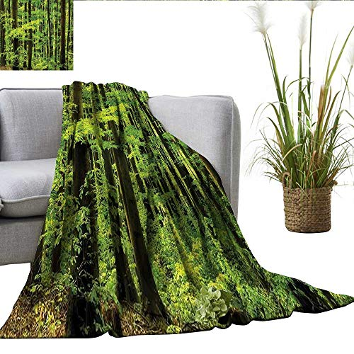 ScottDecor Mountain Plush Throw Spring Foliage Beech Forest Fresh Morning View in The Mountains Image Blankets Green and Dark Green W70 xL90