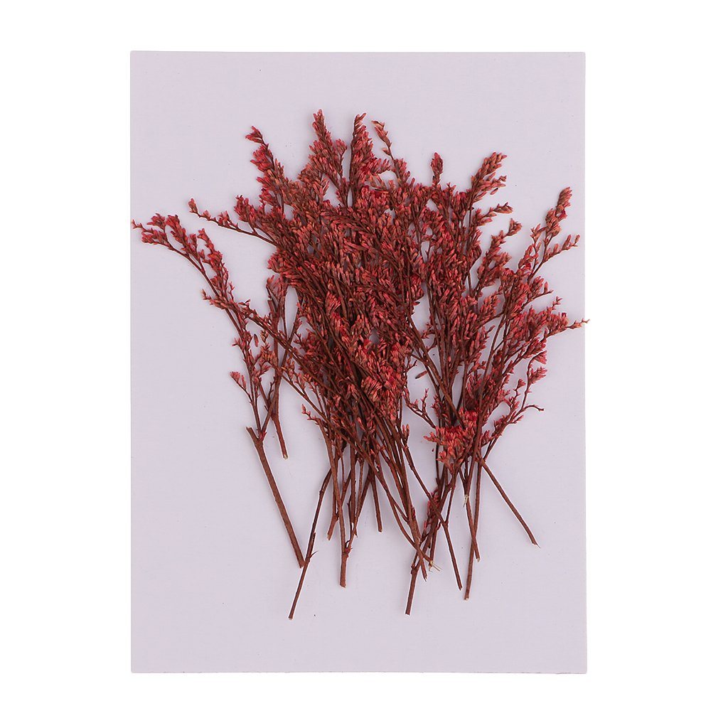 D DOLITY 20 Pieces Dyed Red Pressed Natural Dried Flowers Limonium for DIY Crafts Scrapbooking Jewelry Making Art Crafts 7-10cm