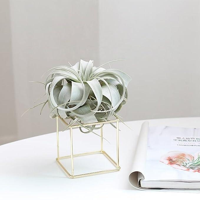 Sue Supply Soporte de flor para receptáculo de plantas, forma ...