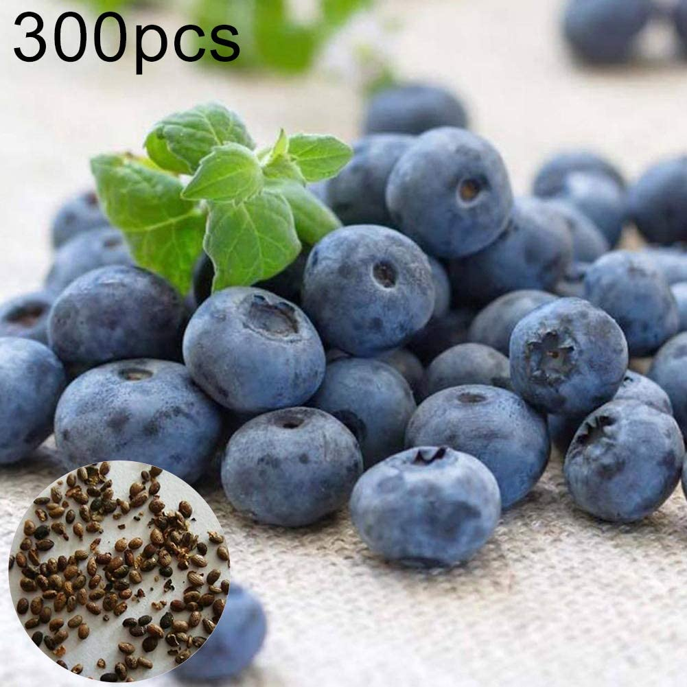 Centraliain Blueberry Tree Seeds, 300Pcs Sweet Blueberry Tree Seeds Delicious Fruit Pot Bonsai Home Garden Plant Semillas de arándano