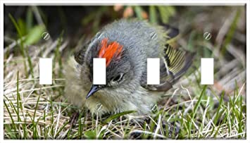 Switch Plate 4 Gang Toggle Chipping Sparrow Sparrow Spizella Passerina Bird Amazon Com