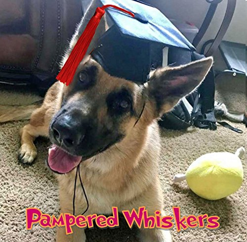 - Pampered Whiskers Dog Graduation Cap for dogs and cats Red tassel (Large-XL - 16-26