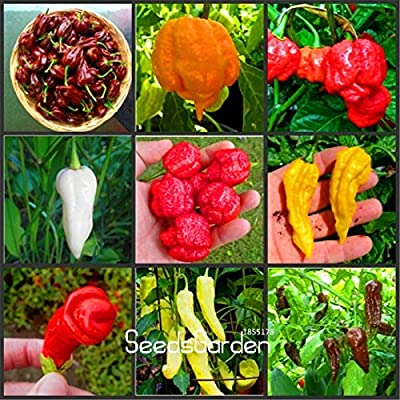 MAPPLEGREEN Time-Limit!!100pcs 16 Kinds to Choose Hot Chilli Pepper Capsicum Vegetable Bonsai,Happy Farm,#BFUV5Y Mixed: Garden & Outdoor